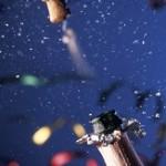 Stargel earns Toshiba dealer distinction