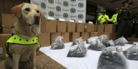 Drug sniffer dog Mona and the cocaine in toner powder seized at Bogotá's El Dorado airport (Credit: John Vizcaino/Reuters)