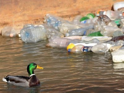 "More action"" needed on UK plastics – The Recycler"