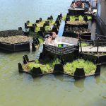 Recycled plastic park wows Rotterdam