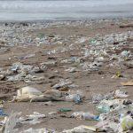 "NZ recycling ""won't be enough"""