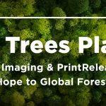 CIG plants more than 700,000 trees